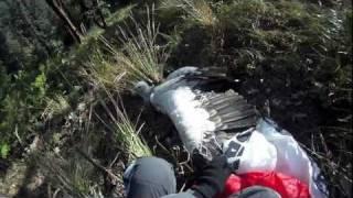 Paragliding vs Eagle (original) / Параплан против орла