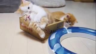 Прикольные рыжие котята