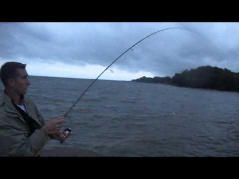 Bronte pier salmon