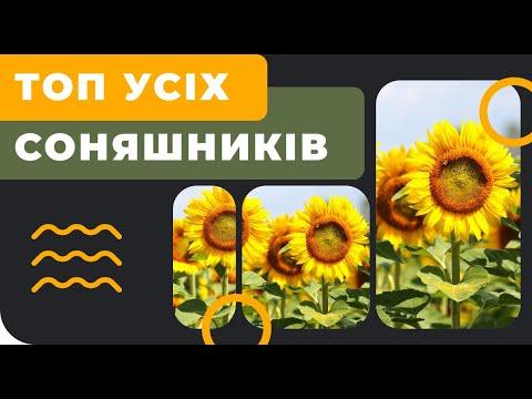 ТОП 5 соняшників 2019