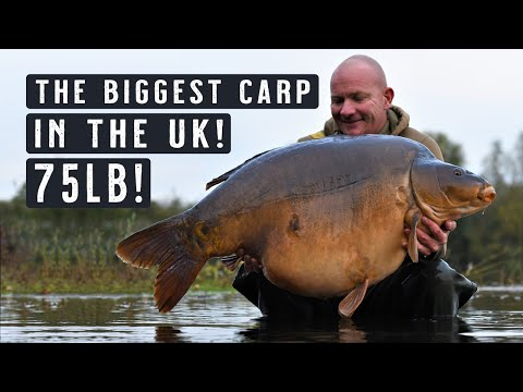 THE BIGGEST CARP IN THE UK! British Record?! 75lb Carp Fishing MONSTER! Mainline Baits Carp Fishing