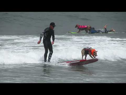 Dog surfing contest in Pacifica