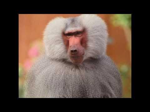 Смешные картинки обезьян. (14 фото) • Прикольные картинки