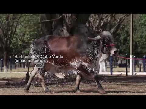 LOTE 14 – ENTIDADE FIV CABO VERDE JCVL3163