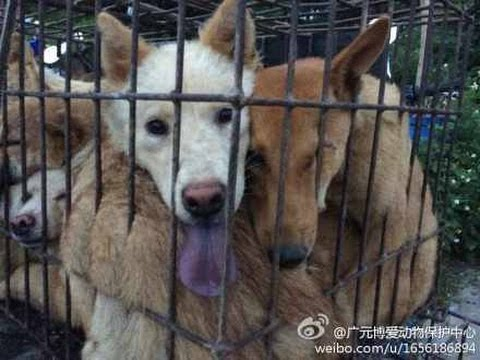 Hot Dog ~ The Real Truth Of Yulin