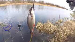 Рыбалка на реке За Плотвой Река Лань Водохранилище Локтыши