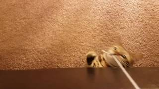 Naughty cat gets beaten with sandal!