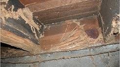 Flying Termites Old Bridge NJ  732-309-4209 Eliminex Exterminators New Jersey