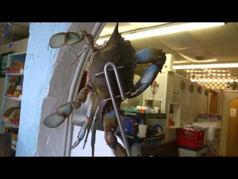 Seafood Jacksonville FL - Live Crabs - YarasSeafood.com 904.725.9497