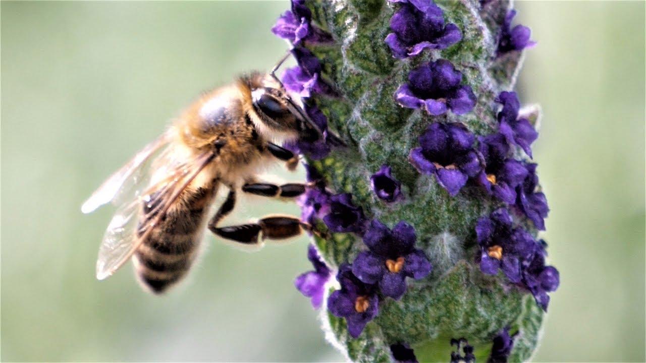 Gartencenter Mencke Bienenfreundliche Pflanzen Fur Garten Und