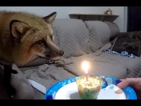 Loki Having His Birthday Cake