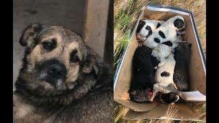 我が子を亡くした母犬と母を失った子犬が出会い... thumbnail