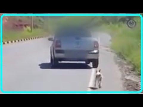 【衝撃】犬が捨てられる瞬間が撮影されていた!その動画が市民を動かし、犬は無事に保護される!!【世界が感動!涙と感動エピソード】