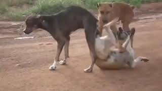 Watch what happen to those dogs