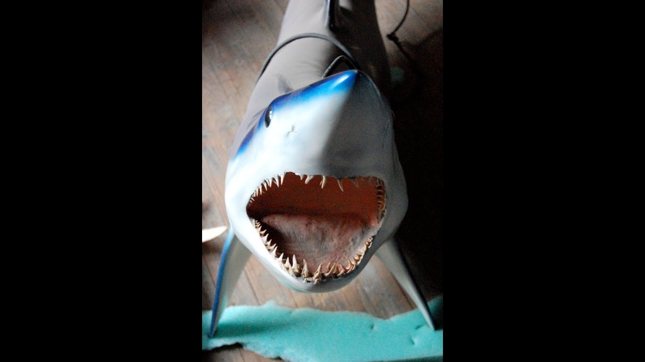 Taxidermy Aquatic Marine Molds For Sale (SOLD)