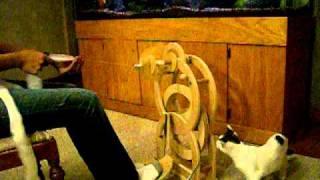 Spinning Wheel - Lanie K's ~infinity~