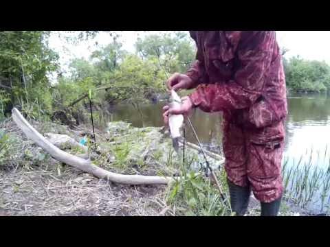 Рыбалка на Клязьме с фидером