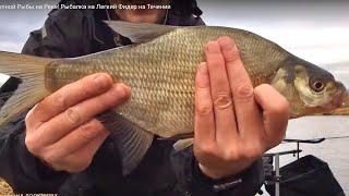 Взвешивание улова Лещи Плотва Язи и Карась Фидерная рыбалка на реке