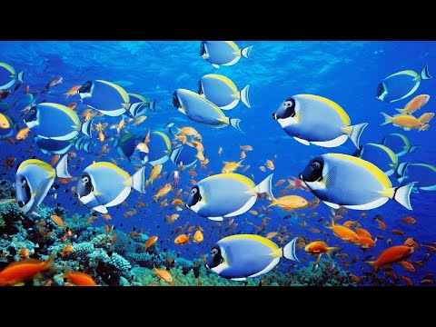 Red Sea, Israel 4K UHD • Diving In Eilat