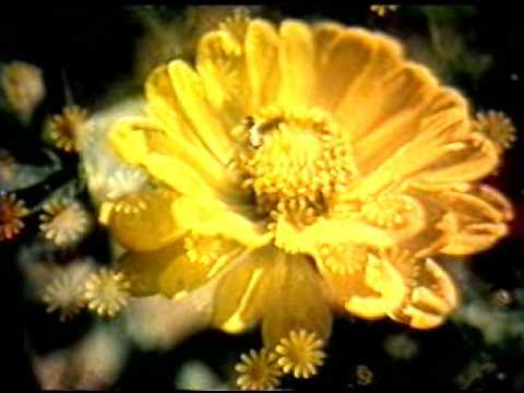 Flowers and their spiritual significance youtube flowers and their spiritual significance mightylinksfo