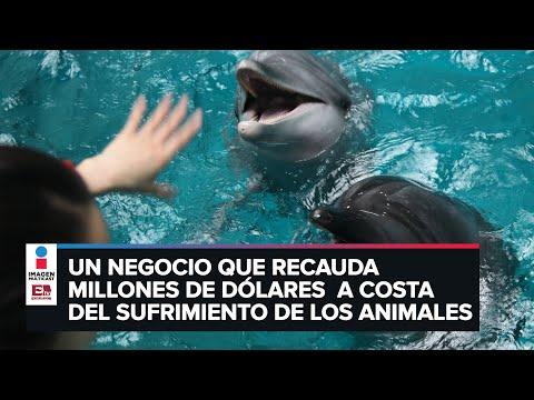 Documental expone el drama de los delfines en cautiverio