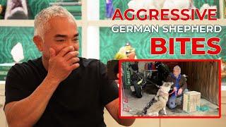 REACTING TO WHEN AN AGGRESSIVE GERMAN SHEPHERD BIT ME!