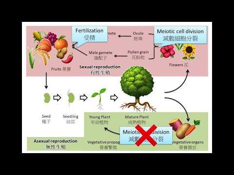 DSE Bio 問世間性為何物?植物的生殖 Plant Reproduction