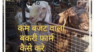 goat farming कम बजट वाला बकरी फार्म कैसे करे?