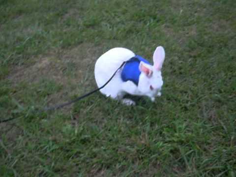 My Pet Florida White Bunny