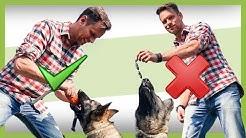 Die 3 häufigsten FEHLER im Hundetraining