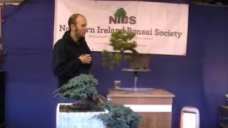 NIBS Peter Warren Workshop Part1 Pinus Mugo