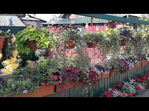 Мой цветущий двор!🌱Красота своими руками!🦋🌺 //My garden! Beauty with your hands!