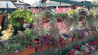 мой цветущий двор!Красота своими руками! //My garden! Beauty with your hands!