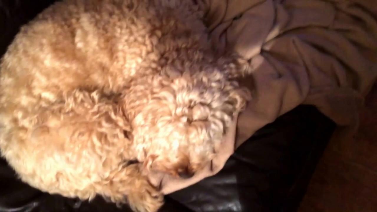 burying my dog youtube