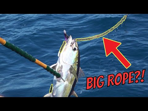 A FAT Tuna STUCK On HUGE ROPE While Offshore Fishing {Catch And Cook}