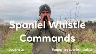 Whistle training commands working Cocker,Springer spaniel puppy Gundog training tips Tricks