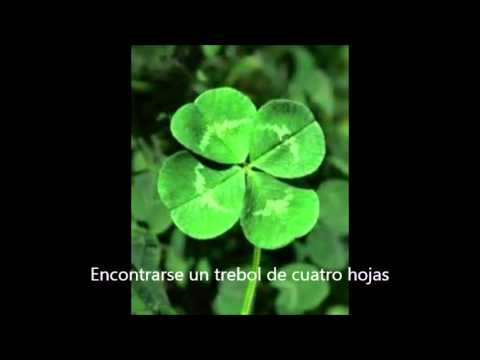 11 cosas que dan buena suerte youtube - Dan mala suerte las hortensias ...