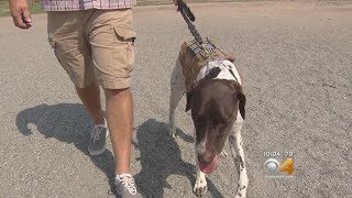 Colorado Charity Uses Service Animals To Help Veterans With PTSD