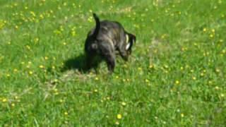 Dogs Trust Ballymena: Eric & Fizz Running About!