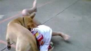 Repeat youtube video MY DOG ATTACKED ME!! =]