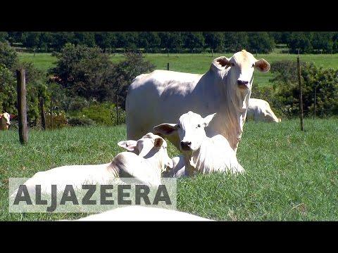 Brazil meat exports plunge after corruption scandal