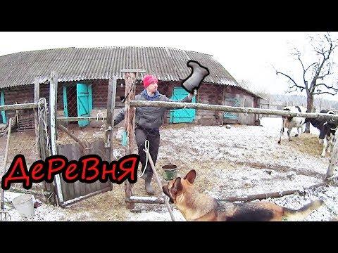 5 минут деревенской жизни //Белорусская деревня // Семья Лях