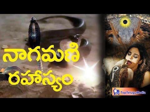 The Secret of Real Nagamani |నాగమణి రహస్యం|Top Telugu Media