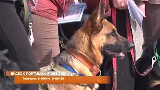 В Шарыпово появится клуб спортивно служебного собаководства