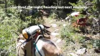 Pack goat:  Heading out, week at Windy Lake
