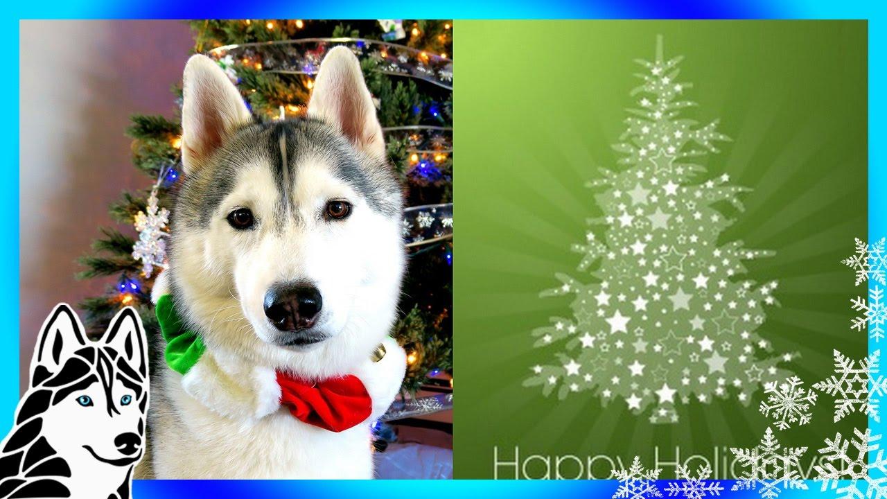 Husky Christmas Cards.Over 400 Christmas Cards Husky Holiday Card Exchange