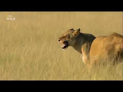 Nat Geo Wild: Смертоносная Африка. Калахари 2018 - Видео онлайн