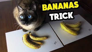 DRAWING vs Real BANANAS - Cat Reaction