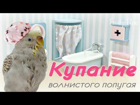 Как мыть волнистого попугайчика