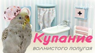 Как искупать волнистого попугая? #Волнистый #попугай #уроки по уходу и содержанию